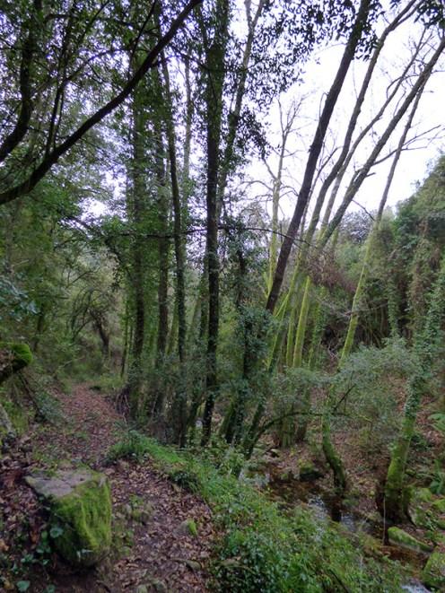 Le sentier longe la rivière sous les arbres.