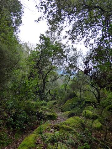 Le sentier est sous les arbres