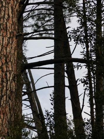 Dans les arbres.