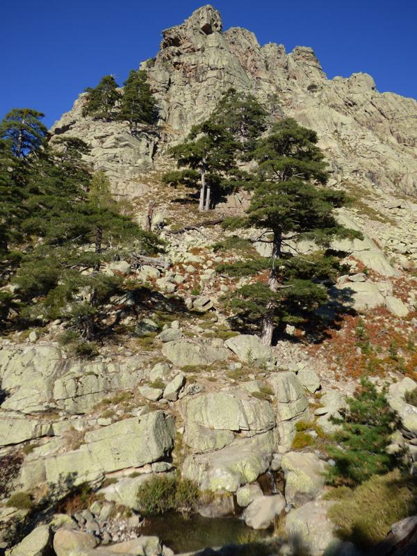 Quelques pins subsistent sur la roche