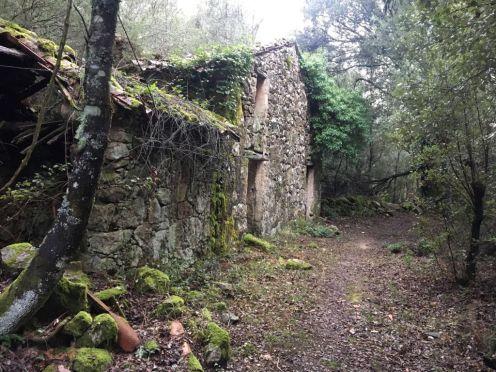Une ruine à Ucciani