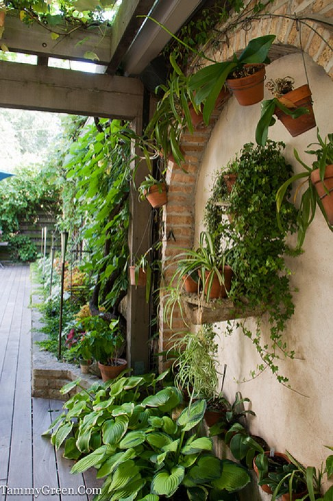 Rick Bayless | Staghorn Ferns