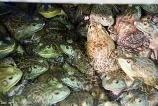Frogs   Mayflower Grocery
