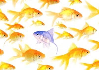 Odd-fish1
