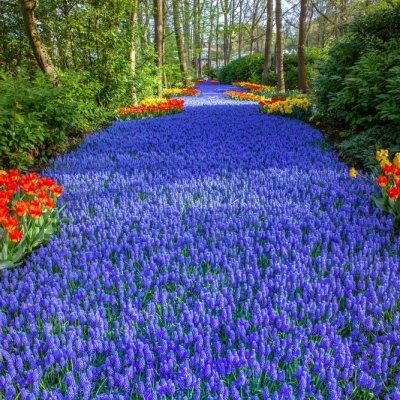 خذ جولة إفتراضية في أكثر حدائق التوليب جمالاً و روعة في هولندا
