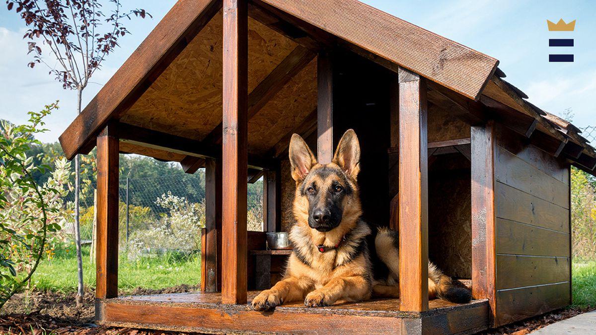 best outdoor dog houses chicago tribune