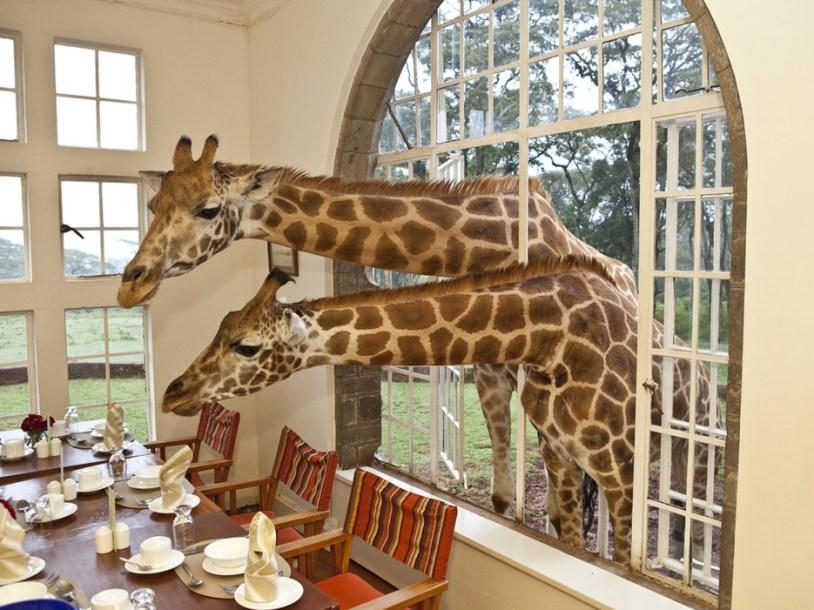 53dac45a6dec627b14a0159c_giraffe-manor-nairobi-nairobi-kenya-107763-2