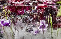 Flavored ice photo by Kenji Shibata