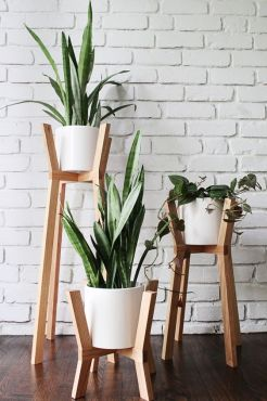 home´s air snake plant