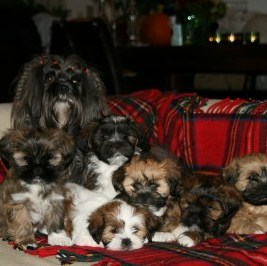 10 very good reasons not to use dog for breeding