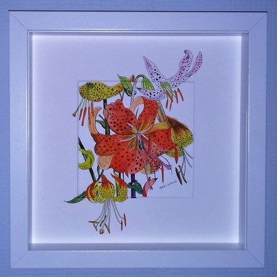 Lilies - Pen/Ink/Watercolour - 25cm.x25cm - by Marion Witcomb