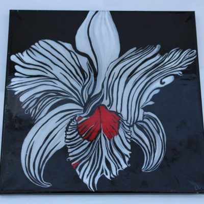 Zebra Orchid - Mixed - 25x25