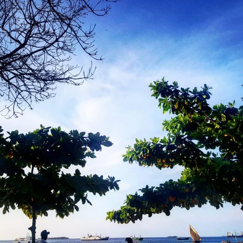 Trees at the Park Hyatt Zanzibar - hanging out in Stone Town before visiting Matemwe hotels