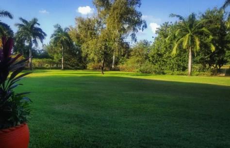 Lawn Serena