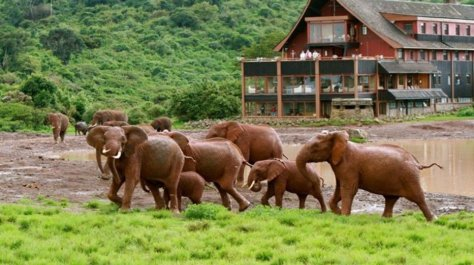 Elephants at The Ark, Aberdare National Park, Kenya