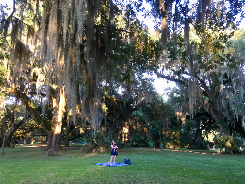 Spanish moss hanging from oak trees in New Orleans