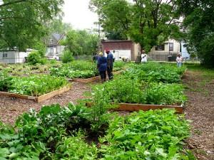 Hermitage Street Community Garden broad shot
