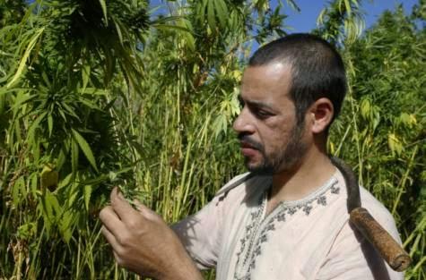 Morocco considers legalising marijuana cultivation