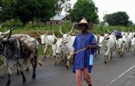 Herdsmen conflict: Neo-feudalism and its problems