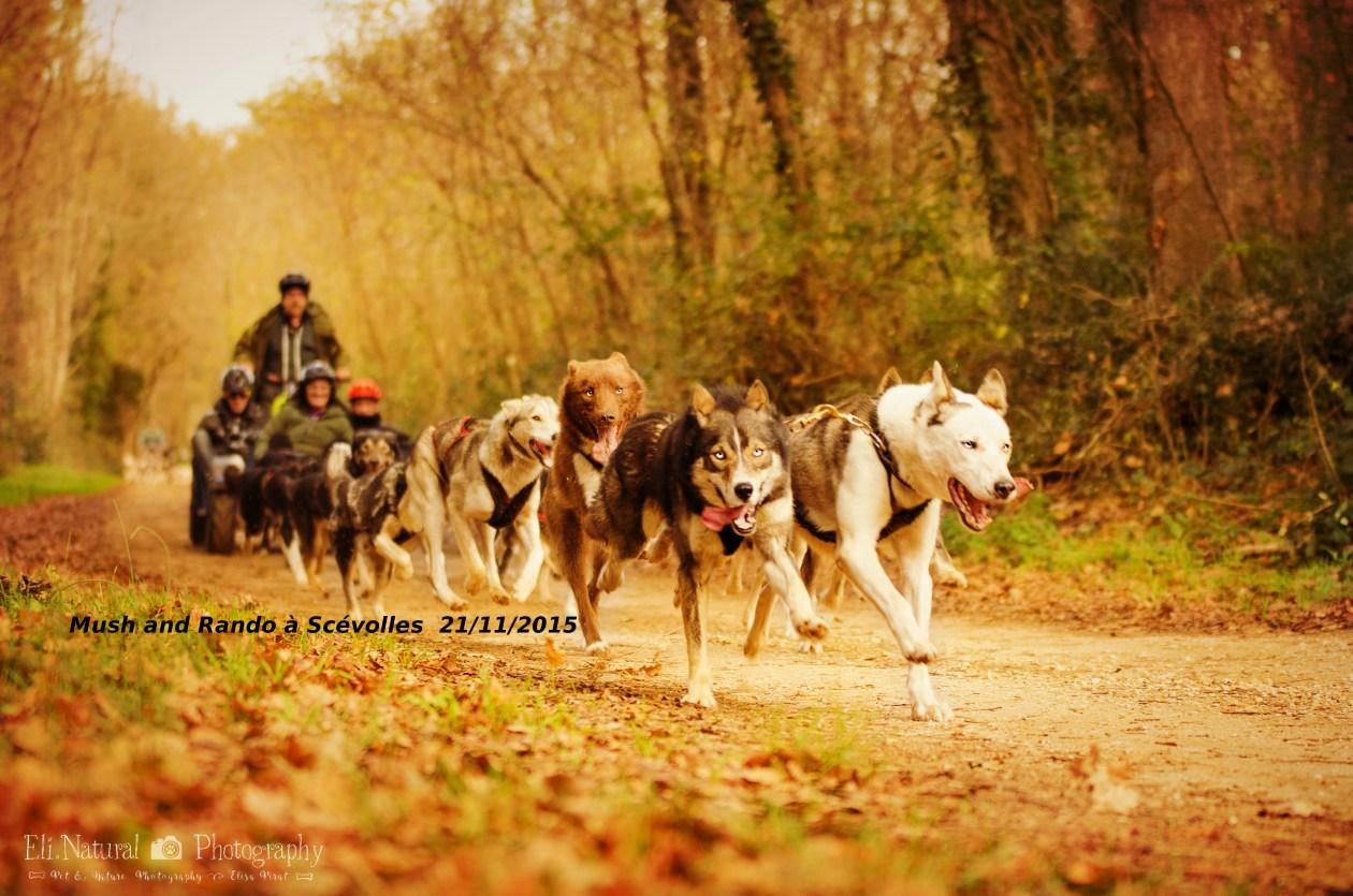 Cani-kart Mush and Rando activités chien de traineau