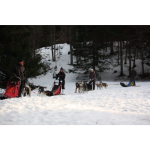 Hebergement chien de traineau Vercors