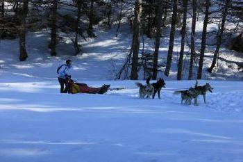 Attelage chiens de traineau dans le Vercors