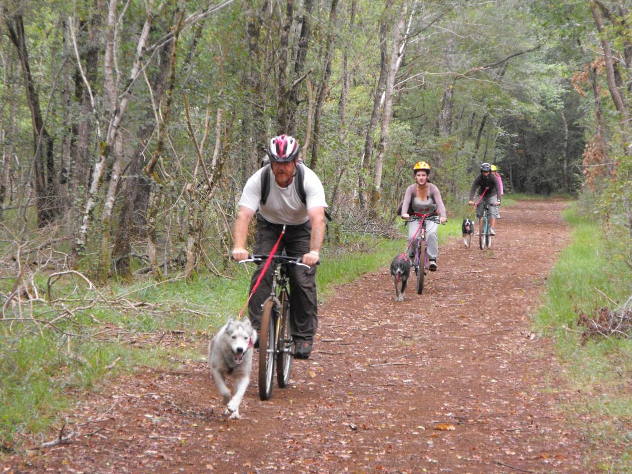 Cani-vtt avec des chiens de traineau en Charente