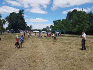présentation de cani rando au Festi'sport nature