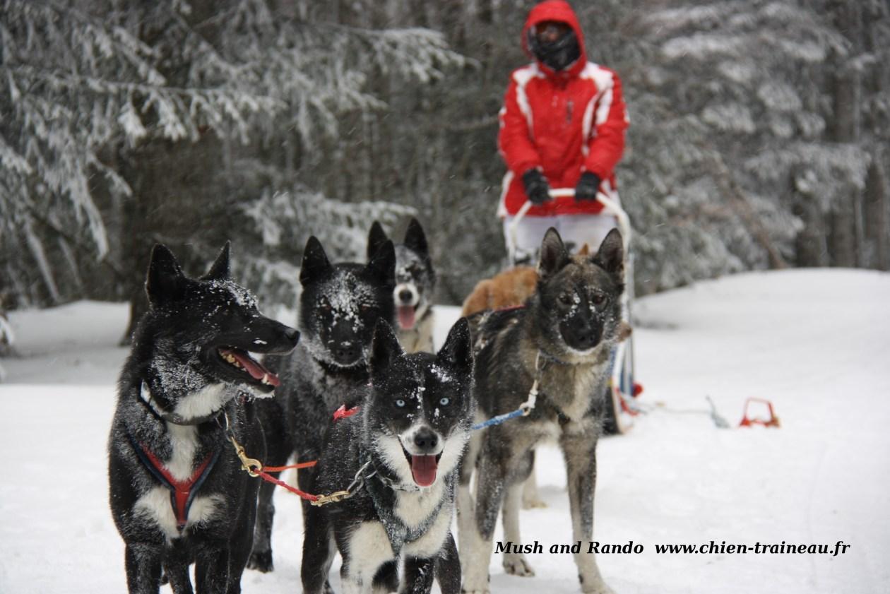 La randonnée en traineau à chiens dans le vercors