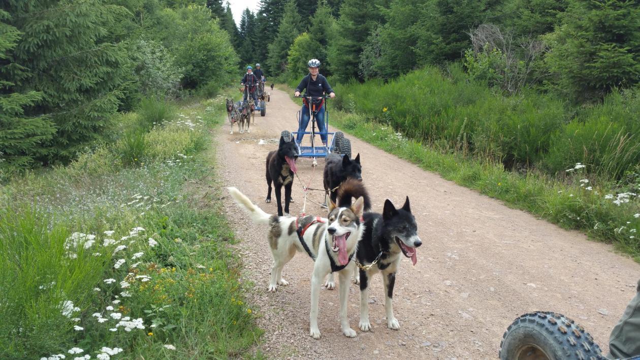 chien de traineau été cani kart dans la Loire Rhone Alpes avec Mush and Rando