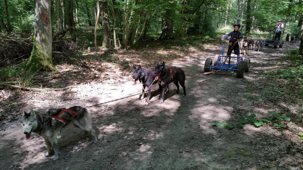 conduite cani-kart chien de traineau été avec Mush and Rando
