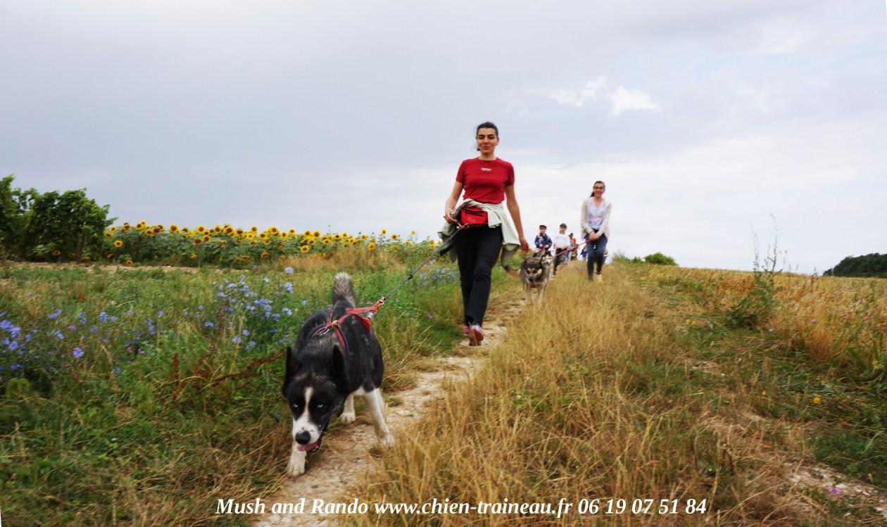 L'Ecole cani-rando Charente