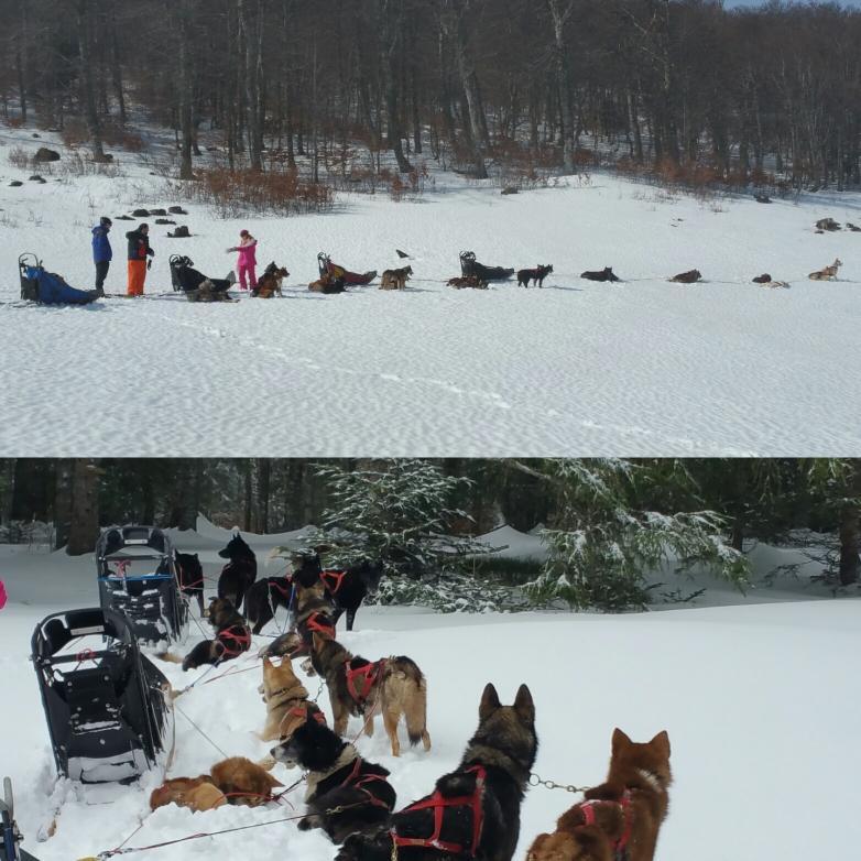Testez la conduite de chien de traineau Vercors