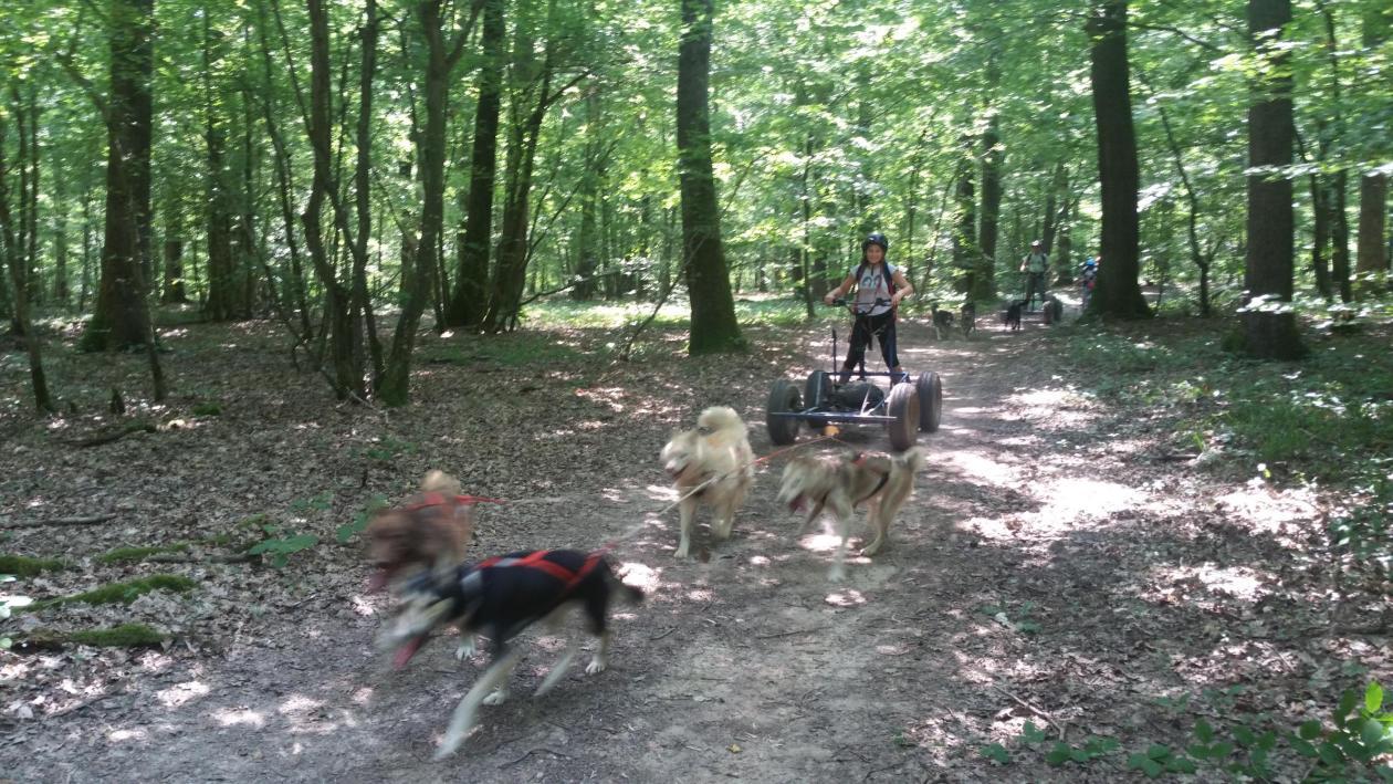 Chien de traineau conduite cani-kart