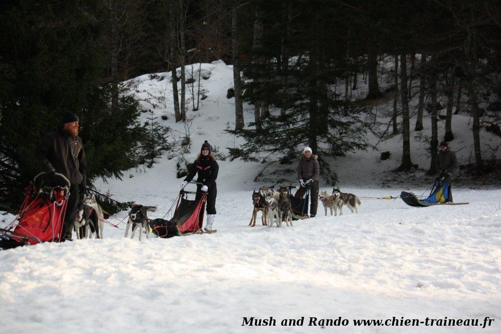 Neige et chiens de traîneau dans le Vercors