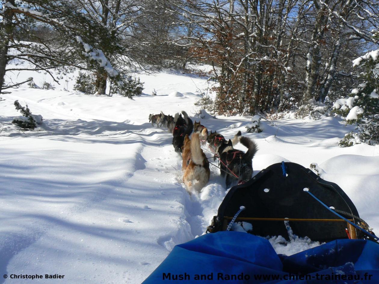 Balade chien de traineau Vercors