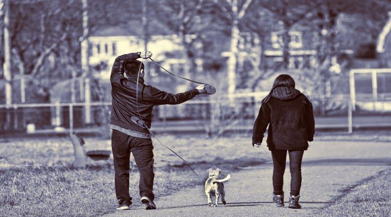 promener son chien avec ou sans laisse loi que dit la loi ?Je vais tout vous dire !