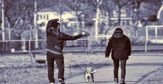Promener son chien sans laisse que dit la loi pénale