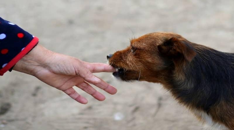 Mon chien m'a mordu, Comment, Pourquoi ? Tout Savoir
