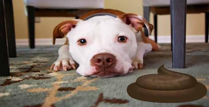 Comment apprendre à éduquer un chien adulte à la propreté 6 méthodes faciles rapides et fiables
