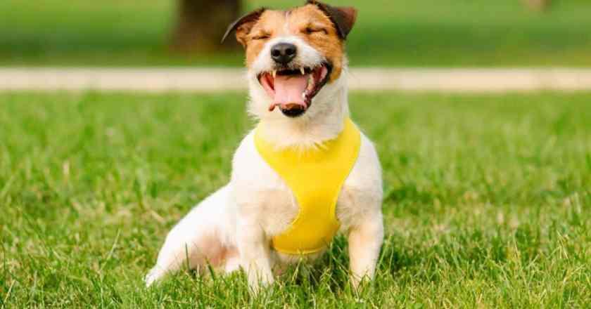 apprendre l'ordre « Assis » à son chien facilement sans crier ?