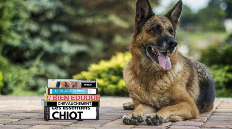 Chien mode d'emploi : comment bien éduquer son chien, chiot facilement avec des méthodes positives et faciles sans crier. Méthode douce et pratique.