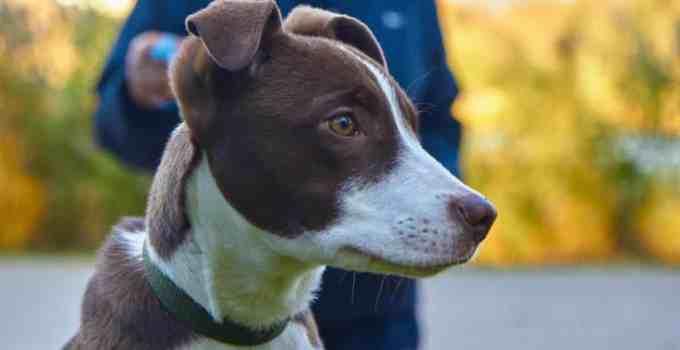Dressage chien les 4 différentes techniques d'apprentissage canin facile sans crier ou hurler
