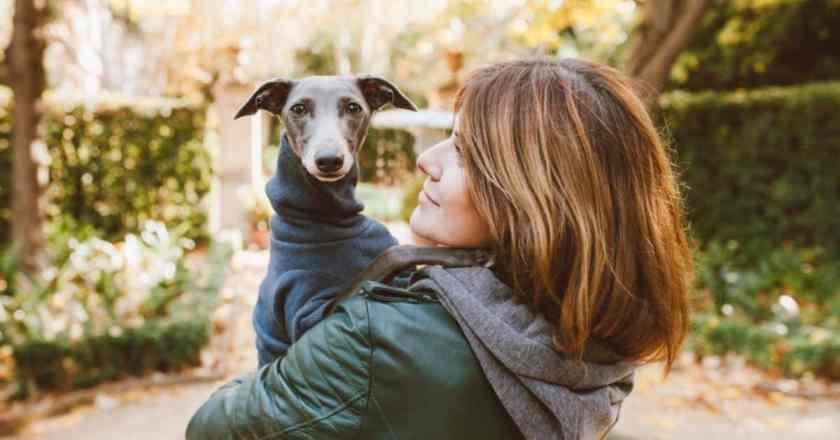 Éducation chien têtu : les pires idées reçues que l'on puisse avoir à son propos.