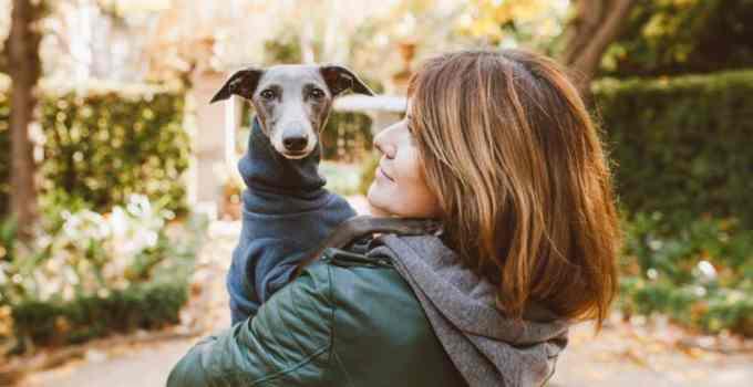 Éducation chien têtu 4 idées reçus qui vont vous faire bondir