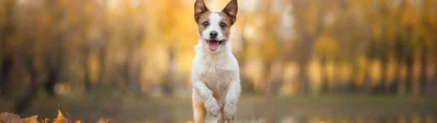 Pour dresser votre chien au rappel, choisir un endroit plutôt calme et paisible vous facilitera grandement la tâche.