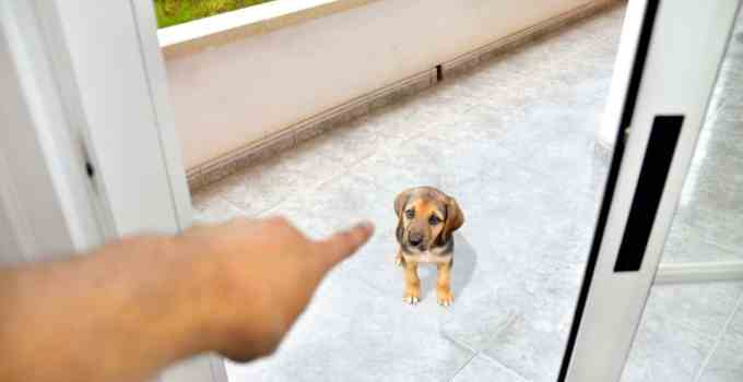 Punir son chien 5 méthodes qui vous rendra fière