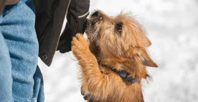 Apprendre à son chien à ne pas sauter sur les gens