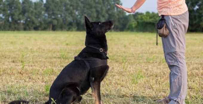 Comment apprendre assis à son chien ?
