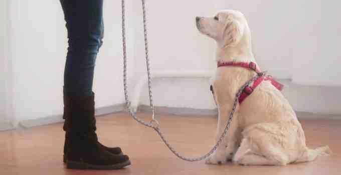 Comment apprendre à son chien à ne pas bouger ?